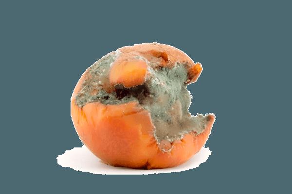 rotten_orange